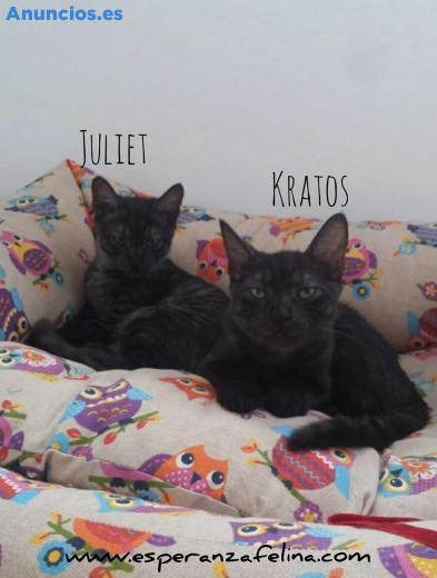Kratos Y Juliet, En AdopcióN. Alava. EspañA