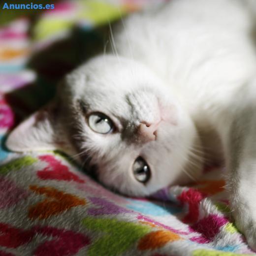 Nayra, Gatita De Ojos Cautivadores En AdopcióN. Alava