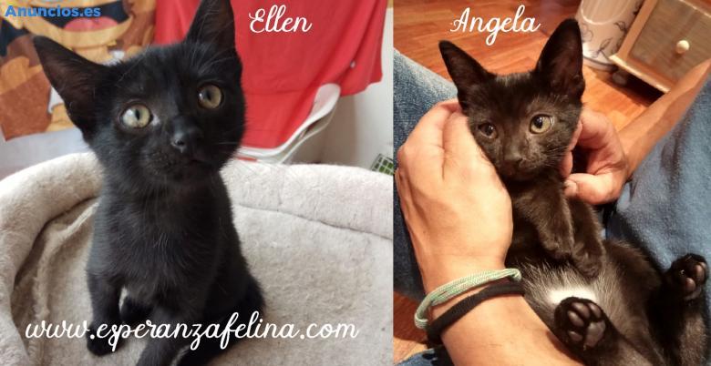 ÁNgela Y Ellen En AdopcióN (ÁLava, EspañA)