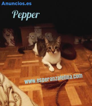 Pepper Y Araia, Adorable Pareja En AdopcióN (ÁLava