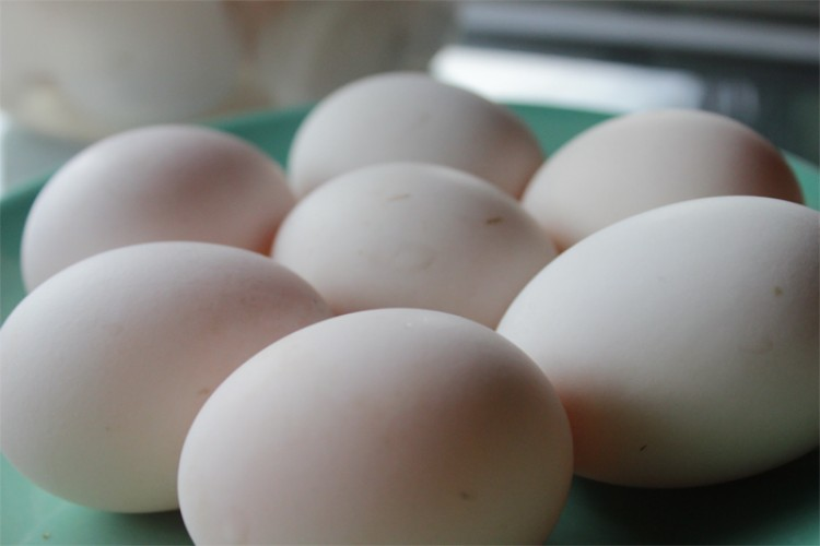 Vendo huevos de Pato para incubar, y de otras razas