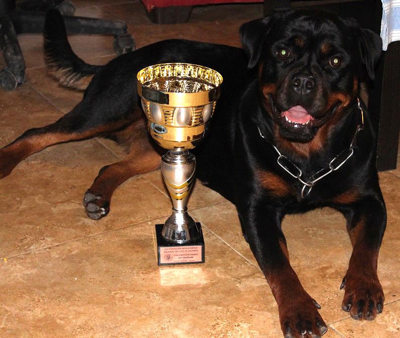 Últimos cachorros de rottweiler hijos de MULTICAMPEÓN -