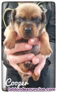 Cachorros en adopcion madrid