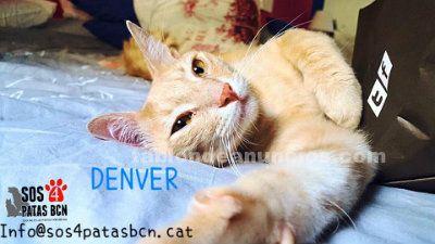 Denver es un gatito diez! es muy bueno y tierno. Busca
