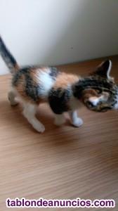 Doy en adopción dos gatitas pequeñas