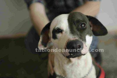 Inka busca hogar en adopcion responsable