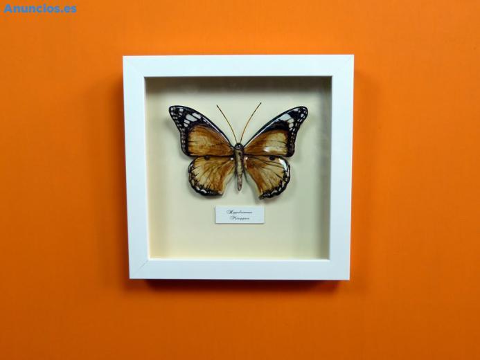 Mariposa De CeráMica Hypolimnas Misippus