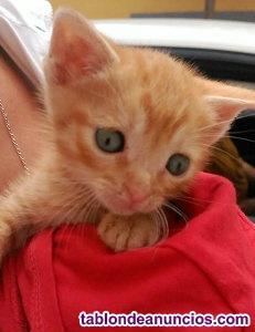 Ofrezco gatitos en adopcion 2 meses