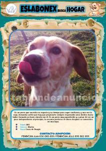 Perro en adopción - eslabonex