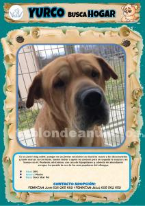 Perro en adopcion - yurco