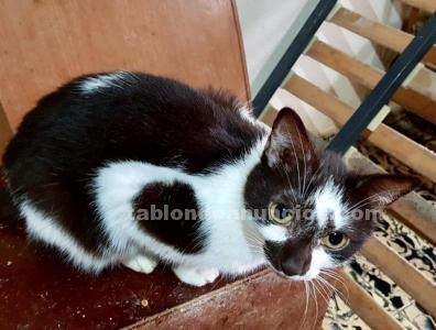 Puzzle gatito en adopcion madrid toledo