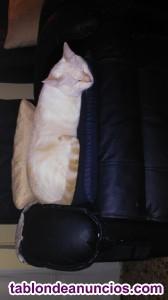 Regalo gatos por no poder atender