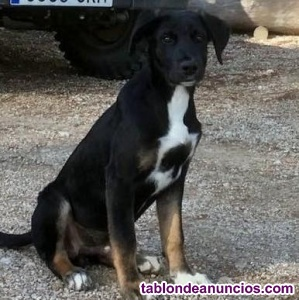 Se regala perrito (macho) de 6 meses aproximadamente