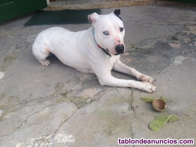 Dog sitter/cuidadora de perros en mallorca