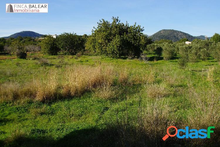 FINCA RUSTICA DE 3440 M2 NO EDIFICABLES EN ZONA DE GRAN