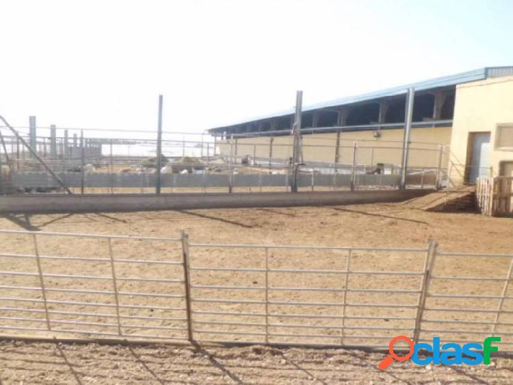 Nave industrial de nueva construcción en venta