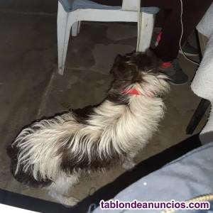 Perro necesita hogar urgente