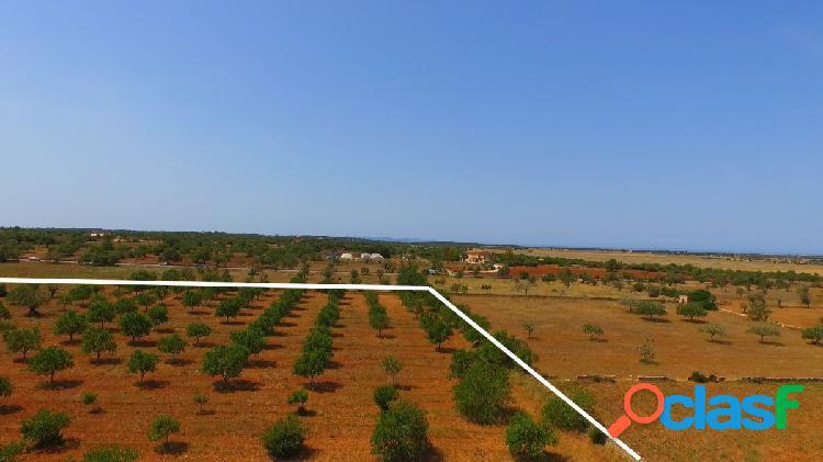 Terreno rústico de 14.800 m2 en Ses Salines