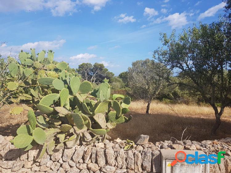 Terreno rústico entre Ses Salines y Colonia de Sant Jordi