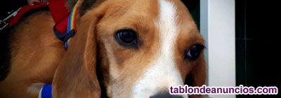 Haguer - perro en adopcion