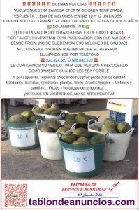 Oferta especial: venta de melones (hasta fin de existencias)