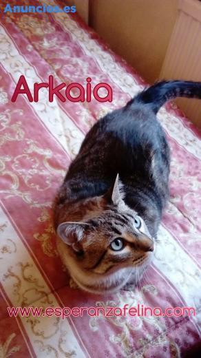 Arkaia En AdopcióN ÁLava-EspañA