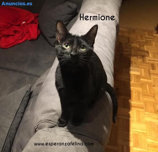 Hermione. Cachorrita En AdopcióN