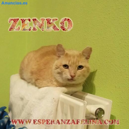 Zenko En AdopcióN ÁLava-EspañA