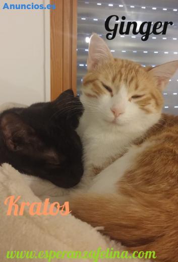 Ginger Y Kratos, Adorable Pareja En AdopcióN (ÁLava