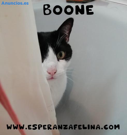 Boone, Vaquito En AdopcióN (ÁLava, EspañA)