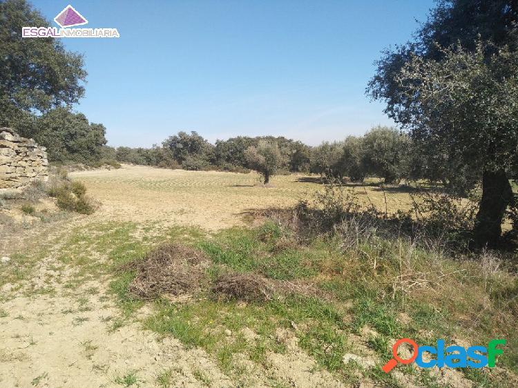Se vende finca rústica 1.7 hectareas en Castillazuelo