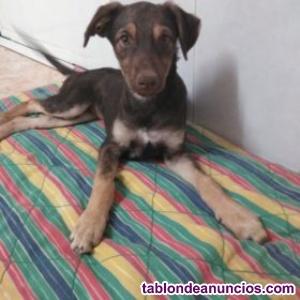 Jara,cachorrita en adopcion responsable
