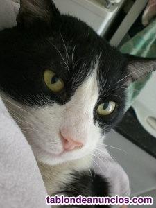 Regalo gatito precioso toby muy cariñoso y simpatico con 9