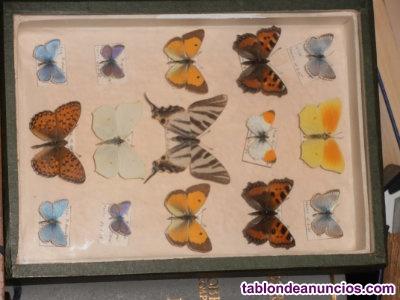 Expositor de mariposas