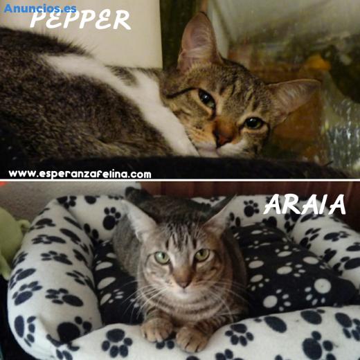 Araia Y Pepper En AdopcióN. Vitoria-Gasteiz, ÁLava.