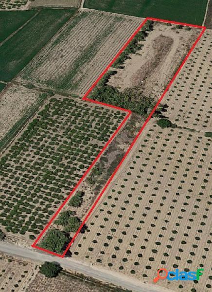 Terreno rústico de regadío en Callosa de Segura zona La