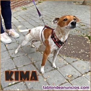Kima,supermimosona, busca hogar en adopcion responsable