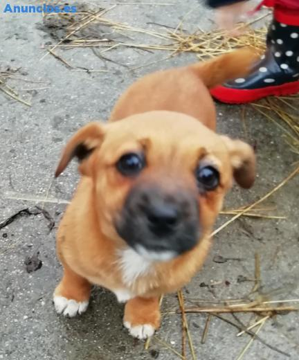 Se Regala Cachorra De 2 Meses