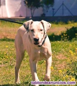 Zora cachorrita en busca de adopcion responsable