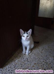 Gatito rescatado de un sindrome de noe