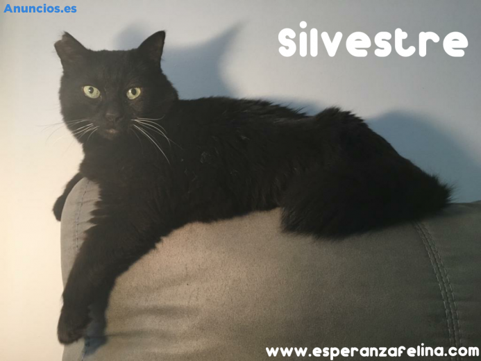 Silvestre, Precioso Negrito En AdopcióN. Alava.