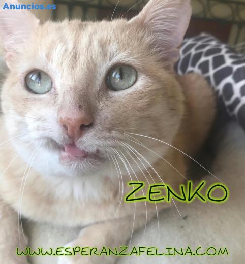 Zenko En AdopcióN +InmunoZenko (ÁLava-EspañA)