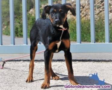 Demi cachorrita en busca de hogar en adopcion