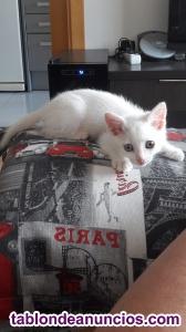 Gatito bebé con 2 meses
