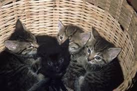 Se regala preciosos gatitos