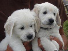 Cachorros Rottweiler macho y hembra de regalo entrenados en