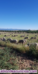 Peon de ganadería