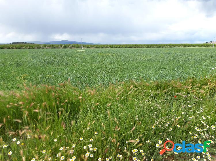 Se venden 65 hectáreas de tierras de regadío