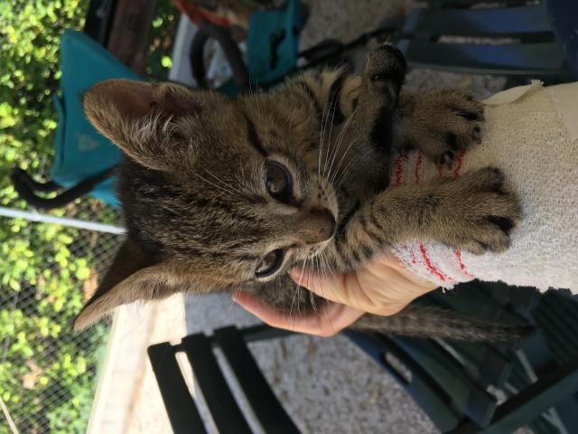 Regalo gatito macho encontrado en la calle