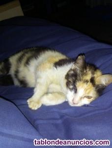 Gatita y gatito en adopción